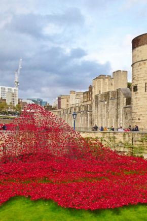 Sea of WW1 Poppies at the Tower of London